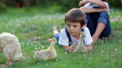 Adorable preschool children, boy brothers, playing with little ducklings in a Stock Footage