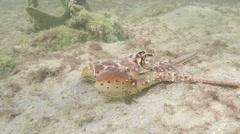 Lobster head on the sea floor Stock Footage