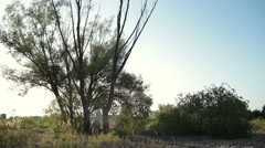 A dry tree falling during logging in the forest Stock Footage