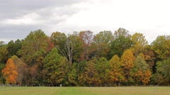 Fall Park Background Stock Footage