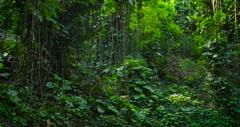 Panning shot across a deep jungle or rainforest canopy. Stock Footage