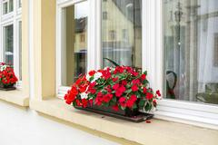 Red flowers on window outside the house with reflections Stock Photos
