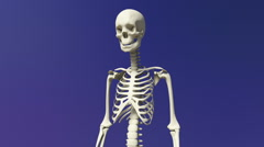 The Human Skeletal System Stock Footage
