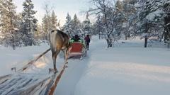 Reindeer ride tour Stock Footage