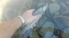 Release of a brown trout in the river Stock Footage