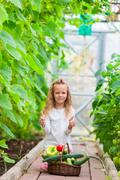 Little girl collecting crop cucumbers and tomatos in greenhouse. Time to harvest Stock Photos