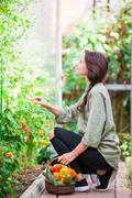 Young woman with basket of greenery and vegetables in the greenhouse. Time to Stock Photos