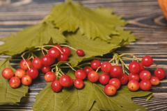 Autumn leaves and berry over wooden background Stock Photos
