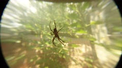 Spider Hanging in the Air on a Background of Trees and a Fence Close-Up Stock Footage