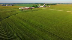 Striking aerial view of mature corn field rows at sunrise Stock Footage