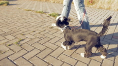 Girl walking with little funny dog in the park Stock Footage