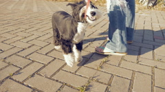 Girl walking with little funny dog in the park - stock footage