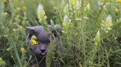 British cat in a green grass Stock Footage