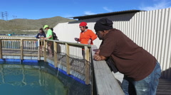 Tourists feeding Salmon Fish in floating farm on the glacial waters of Wairepo A Stock Footage