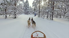Husky ride on winter vacation Stock Footage