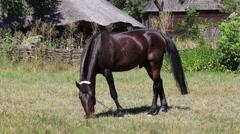 Beautiful brown horse grazing in a meadow. Pirogovo, Kiev, Ukraine Stock Footage