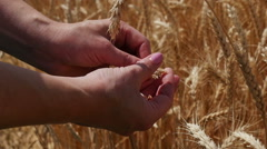 Close-up of hand on wheat for the sunset Stock Footage