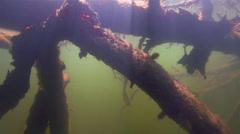 Silhouette of a tree under the water illuminated by sunlight in slow motion Stock Footage