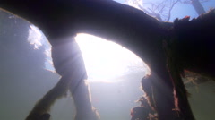 Silhouette of a tree under the water illuminated by sunshine in slow motion Stock Footage