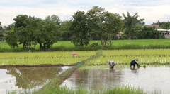 Farmers in the farming of Thailand started already in the field Stock Footage