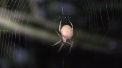 Spider pounces on bug in web at night Stock Footage