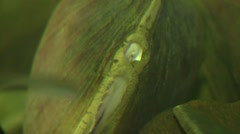Clam on river bottom view inside shell zoom out Stock Footage