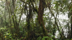 Gliding past misty montane rainforest  Stock Footage