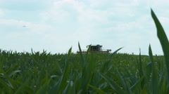 Field corn leaves farm field agriculture Stock Footage