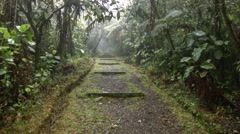 Walking along a footpath running through misty montane rainforest Stock Footage