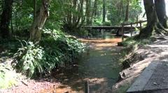 Woodland Stream with dappled summer sunshine Stock Footage