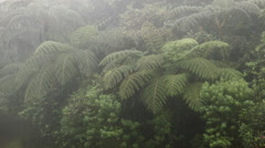 Time-lapse of tree ferns in the mist.   Stock Footage