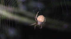 Spider grooming itself in web at night Stock Footage