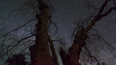 Spooky Tree Time lapse 29.976 fps Stock Footage