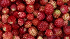 Fresh, ripe, juicy red strawberries rotate, wild berry. Close up Stock Footage