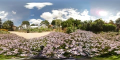 360 VR Beautiful blue-lilac flowers in botanic garden with glasshouses Stock Footage