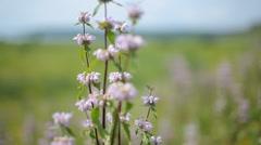 Blooming meadow. Wildflowers sway in the wind Stock Footage