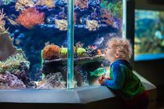 Little boy at tropical aquarium Stock Photos