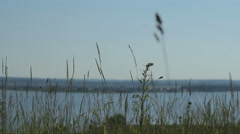 Panorama: scenic views of nature. Grass sways in the background of the river Stock Footage