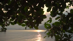 Panoramic View on a Seascape Under a Loppy Spreading Tree. Slow Motion Stock Footage