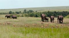 THOMSON'S GAZELLES ELEPHANTS KENYA AFRICA Stock Footage
