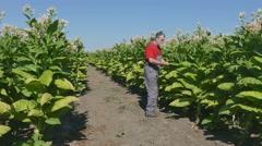 Farmer examine tobacco Stock Footage