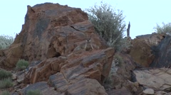 Purple-necked Rock Wallaby female with baby in pouch jump down the red rocks Stock Footage