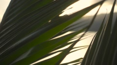 The Sun Shines Through the Palm Leaf. Slow Motion Stock Footage