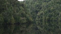 Lush rain forest on a gordon river cruise in tasmania Stock Footage