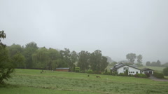 Llamas farm in the foggy morning Stock Footage