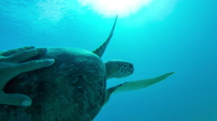Man swimming with a sea turtle in the Virgin Islands Stock Footage