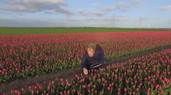 Tulip field Stock Footage