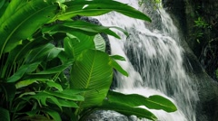 Waterfall In The Jungle Stock Footage