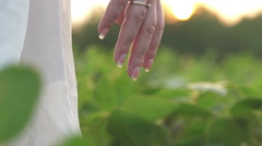 Woman's hand holding a poppy lit evening sun Stock Footage