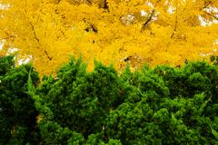 Green and yellow foliage color Stock Photos